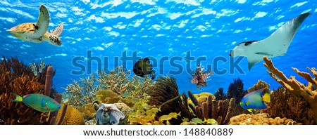Underwater panorama with great variety of fish and coral - stock photo