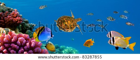 Underwater panorama with turtle, coral reef and fishes. Sharm el Sheikh, Red Sea, Egypt - stock photo