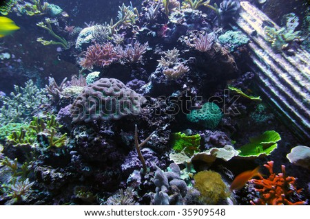 Underwater photo of tropical coral reef