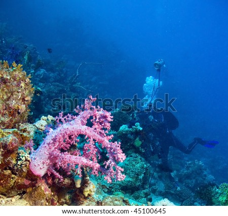Underwater photographer by the reef - stock photo