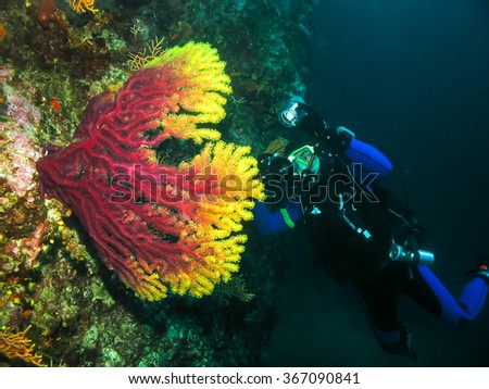Underwater photographer is taking picture of a coral. Seascape nature ambient shot of scuba activity and wildlife. Active vacation and nature conservation. - stock photo