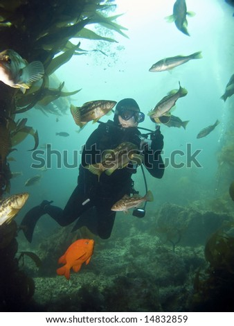 Underwater Photographer surrounded by fish looking into each others eyes in Catalina - stock photo