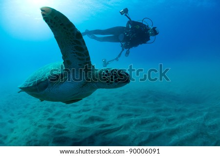 Underwater photographer taking photo of a green turtle. - stock photo