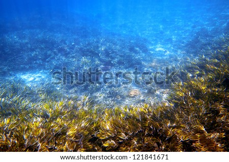 Underwater picture of waving sea grass in the sunlight - stock photo