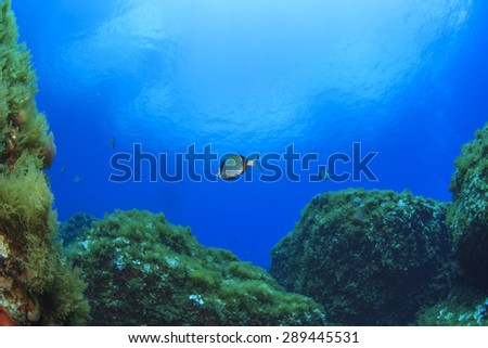Underwater reef and fish in Mediterranean Sea - stock photo