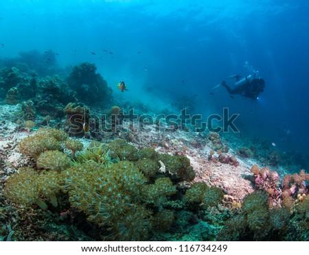underwater reef scape - stock photo
