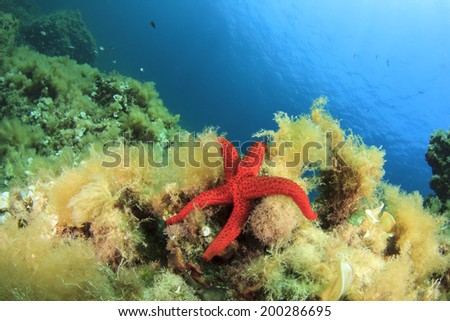 Underwater reef with red starfish in Mediterranean Sea - stock photo