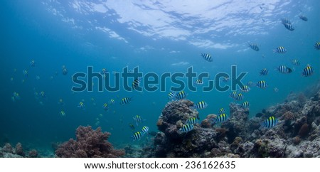 underwater reefscapes with divers