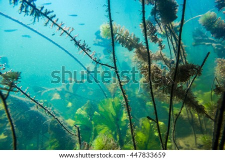 Underwater river landscape with algae in muddy water - stock photo