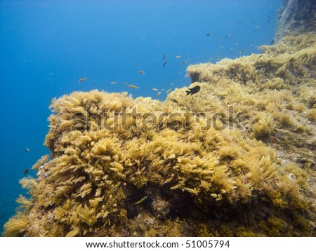 Underwater rocks see while scuba diving in tenerife - stock photo