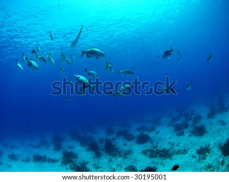 Underwater scene at Turks & Caicos