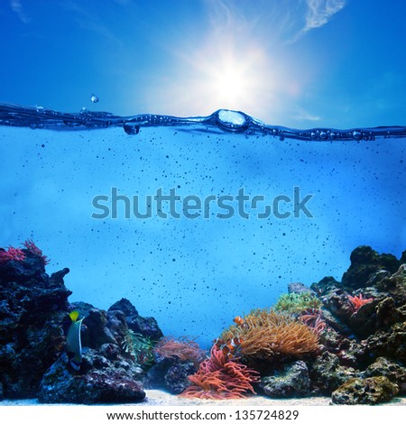 Underwater scene background. Coral reef, blue sunny sky shining through clean water. Space underwater for you to fill or just use standalone. High res - stock photo