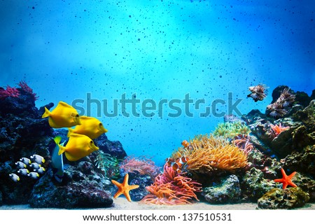 Underwater scene. Coral reef, colorful fish groups and sunny sky shining through clean ocean water. Space underwater for you to fill or just use standalone. High res - stock photo