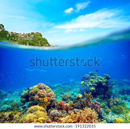 Underwater scene near the island of Boracay. Coral reef, colorful fish and sunny sky shining through clean ocean water. Space underwater for you to fill or just use standalone. High res - stock photo