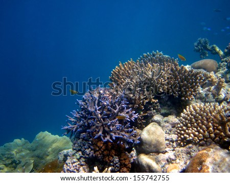 Underwater scene of the Great Barrier Reef in the Whitsundays, Australia. - stock photo