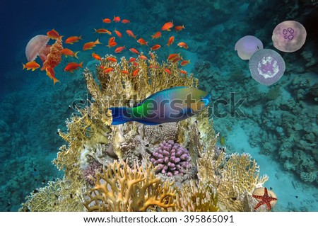 Underwater scene, showing different colorful fishes swimming.  Red Sea, Egypt - stock photo