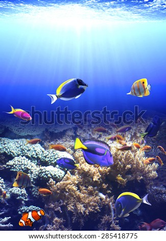 Underwater scene with beautiful tropical fish - stock photo