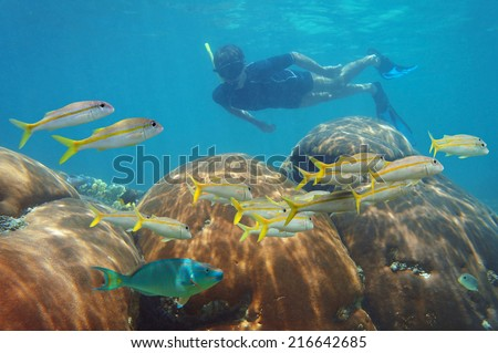 underwater scene with man snorkeling in a coral reef and looking school of fish in the Caribbean sea - stock photo