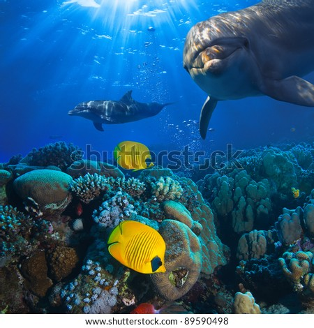 Underwater scene with two dolphins and yellow fish with coral background