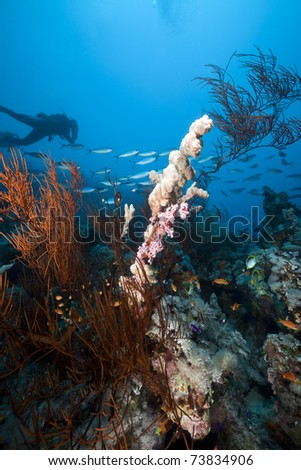 Underwater scenery and a diver in the Red Sea.