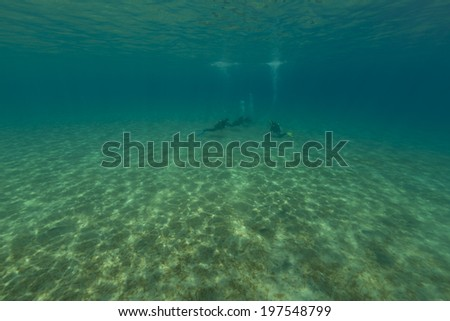Underwater scenery and divers in the Red Sea - stock photo