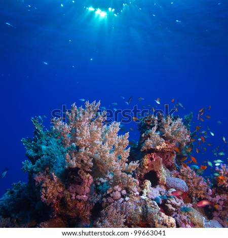 underwater scenery beautiful coral reef full of colorful fish - stock photo