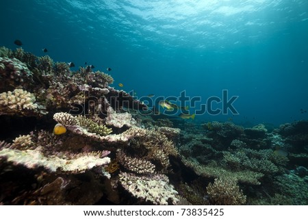 Underwater scenery in the Red Sea. - stock photo