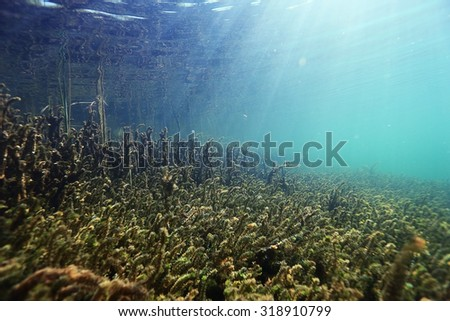 underwater scenery in the river diving - stock photo