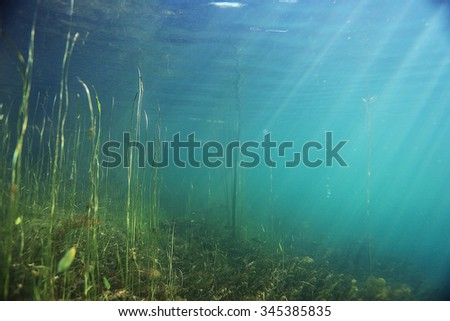 underwater scenery in the river diving