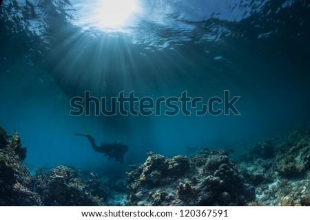 underwater sea scape - stock photo