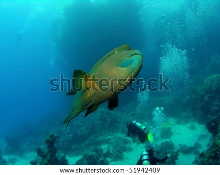 Underwater seascape with divers and napoleonfish - stock photo
