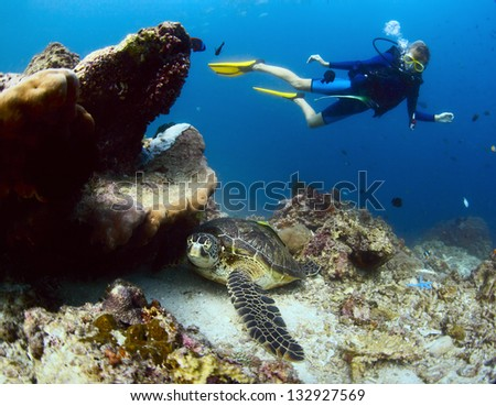 Underwater shoot of a diver watching a sea turtle ( Chelonioidea) having rest on a bottom - stock photo