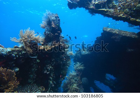 Underwater shoot of a shipwreck USAT Liberty in Tulamben, Bali, Indonesia - stock photo