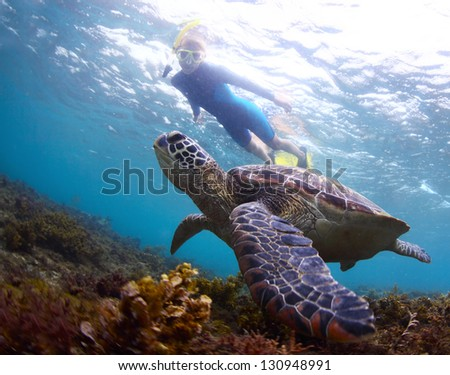 Underwater shoot of a snorkeler watching a sea turtle ( Chelonioidea) swimming over a bottom - stock photo