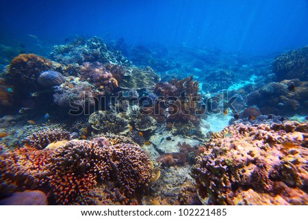 Underwater shoot of a vivid coral reef - stock photo