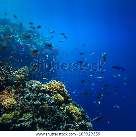 Underwater shoot of a vivid coral reef with fishes and clear water