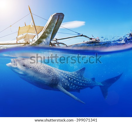 Underwater shoot of a whale shark - stock photo
