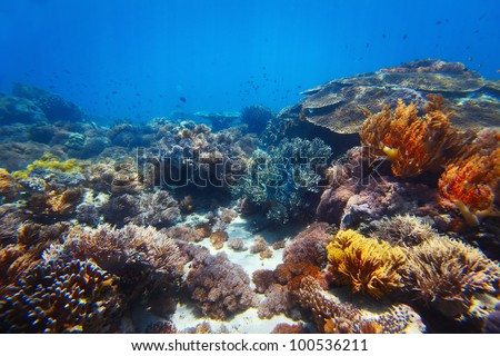 Underwater shoot of vivid coral reef with a fishes - stock photo