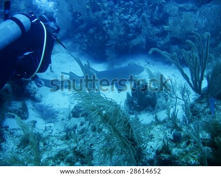 Underwater shot of Shark off the Galapagos Islands - stock photo