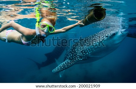Underwater shot of the young lady snorkeling with whale sharks - stock photo