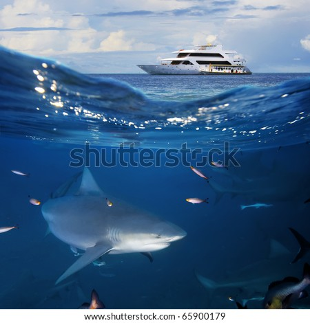 Underwater shot splitted two parts The Bottom One with wild big bull-shark surrounded by fish and shadowy silhouettes of other sharks in blue deep Top part is cloudy seascape with modern divers yacht - stock photo