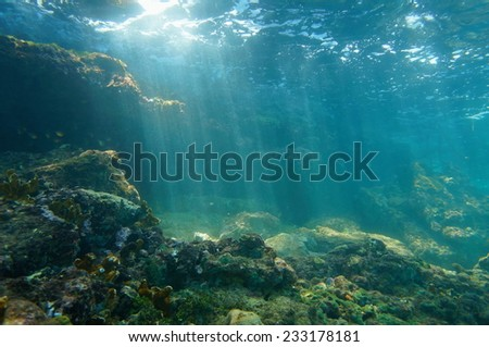 Underwater sunbeams through the water surface viewed from the seabed on a reef of the Caribbean sea, natural scene - stock photo