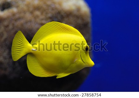 Underwater tropical reef fish - stock photo