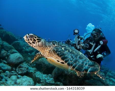 Underwater turtle - stock photo