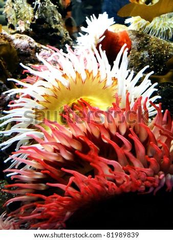 Underwater View  - stock photo