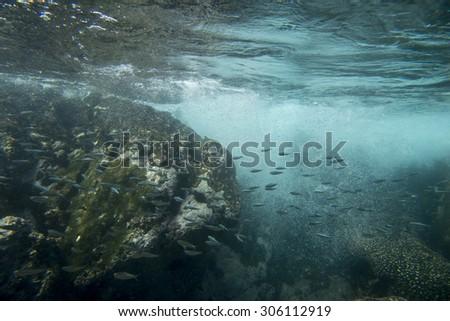 Underwater view of school of fish, Zihuatanejo, Guerrero, Mexico - stock photo