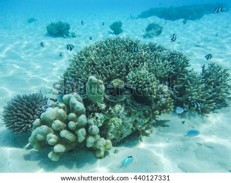 Underwater view with wonderful and beautiful corals and tropical fish at Maldives