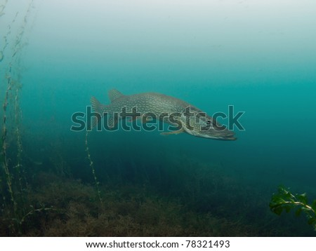Underwater wide angle photography from a big pike - stock photo