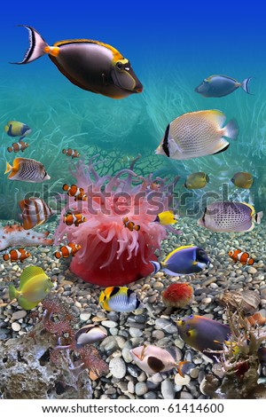 Underwater world - stock photo