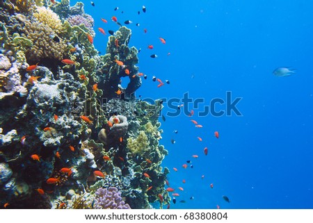 Underwater world. Coral fishes of Red sea. Egypt - stock photo